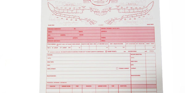 The Edge Equine | Allen Dental Invoice/chart 50Pk | Equine Dentistry With Dental Invoice