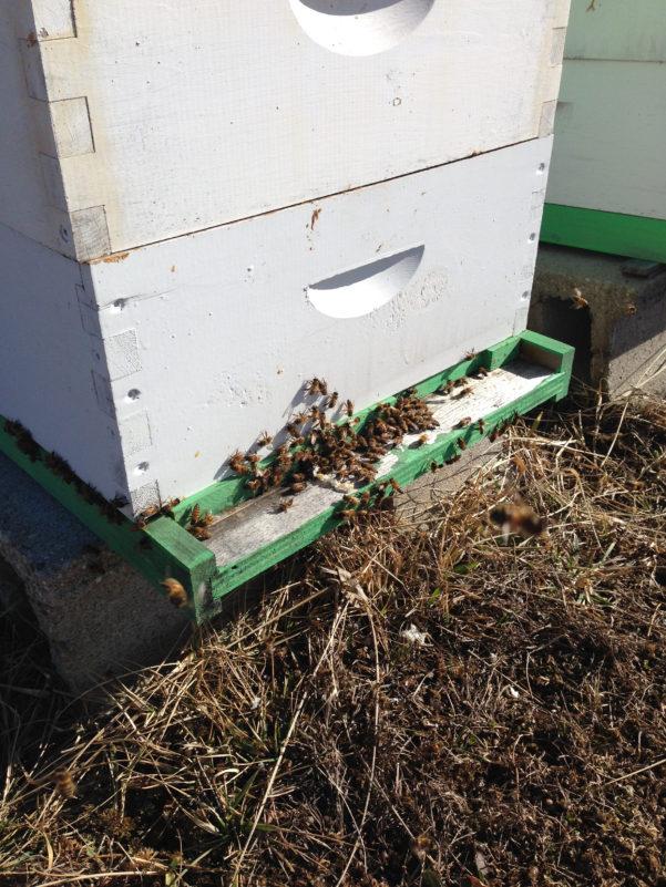 Beekeeping Spreadsheet Intended For Beekeeping Record Keeping  Russell Honey