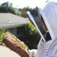 Beekeeping Spreadsheet Pertaining To Beekeeping Like A Girl Why Keep Hive Inspection Notes?