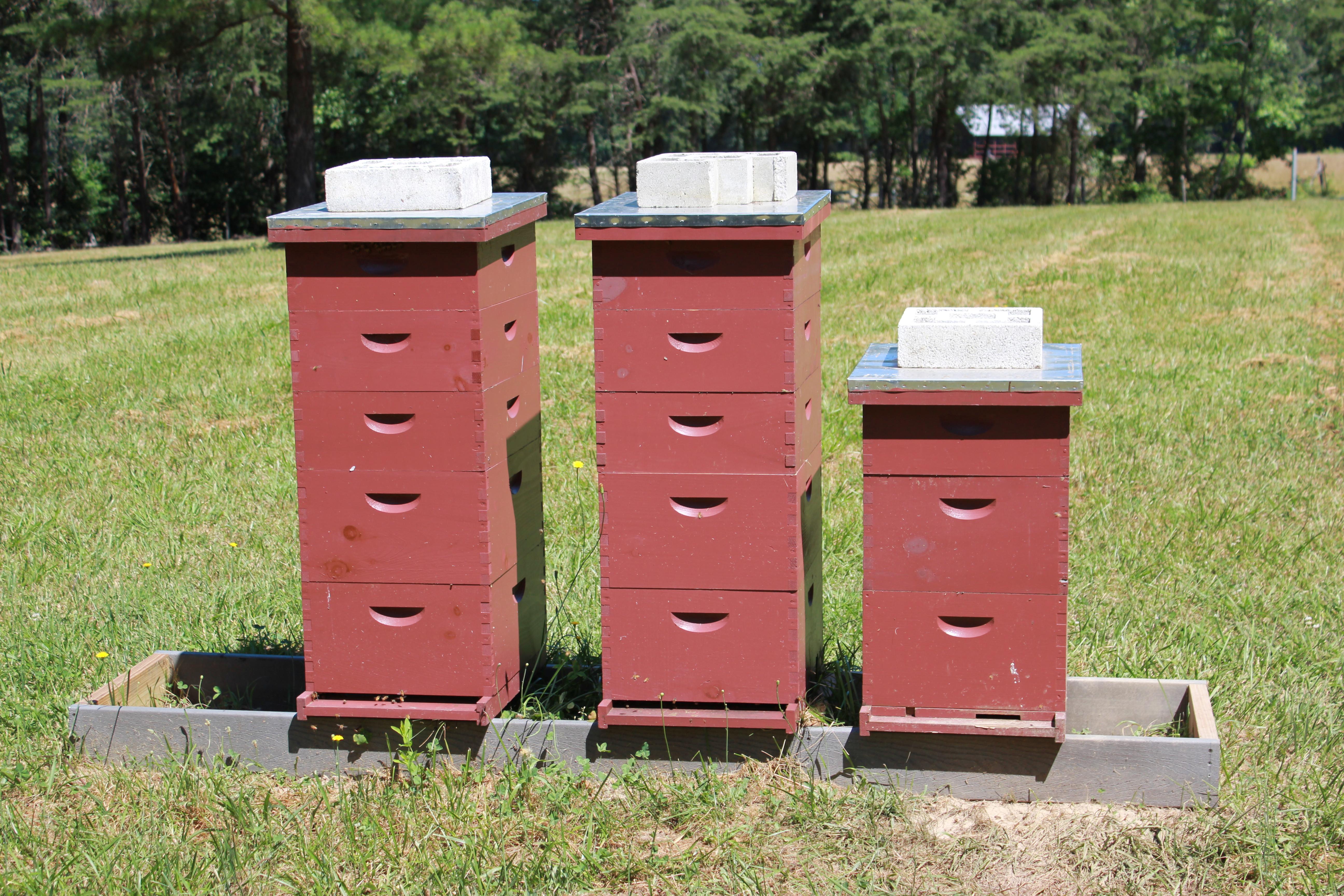 Beekeeping Spreadsheet With Regard To How To  Northeast New Jersey Beekeepers Association
