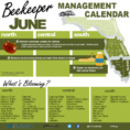Beekeeping Spreadsheet Within Beekeepers Association Of Southwest Florida  Home Page