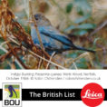 British Bird List Spreadsheet pertaining to Changes To The British List 21 Dec 2018  British Ornithologists