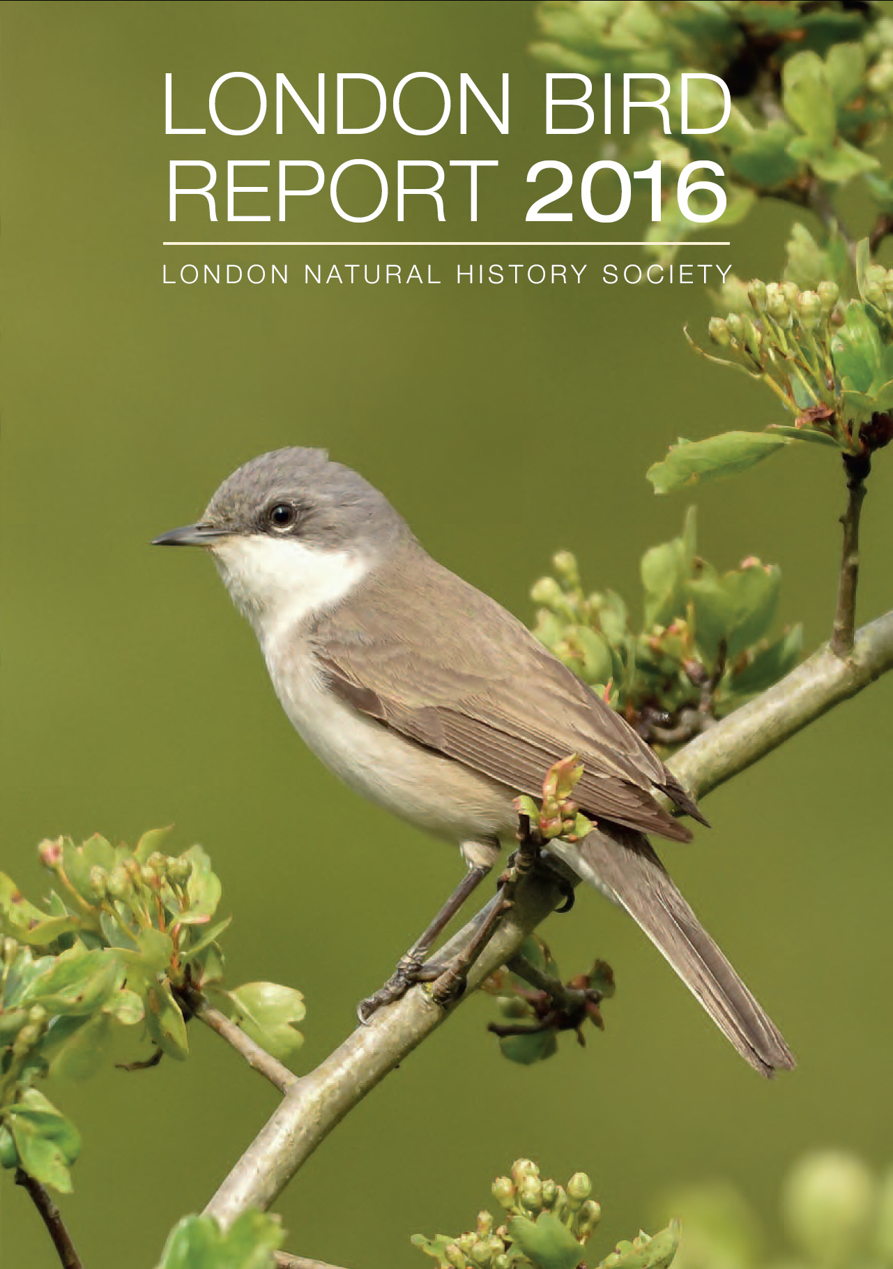 British Bird List Spreadsheet With London Natural History Society  Home