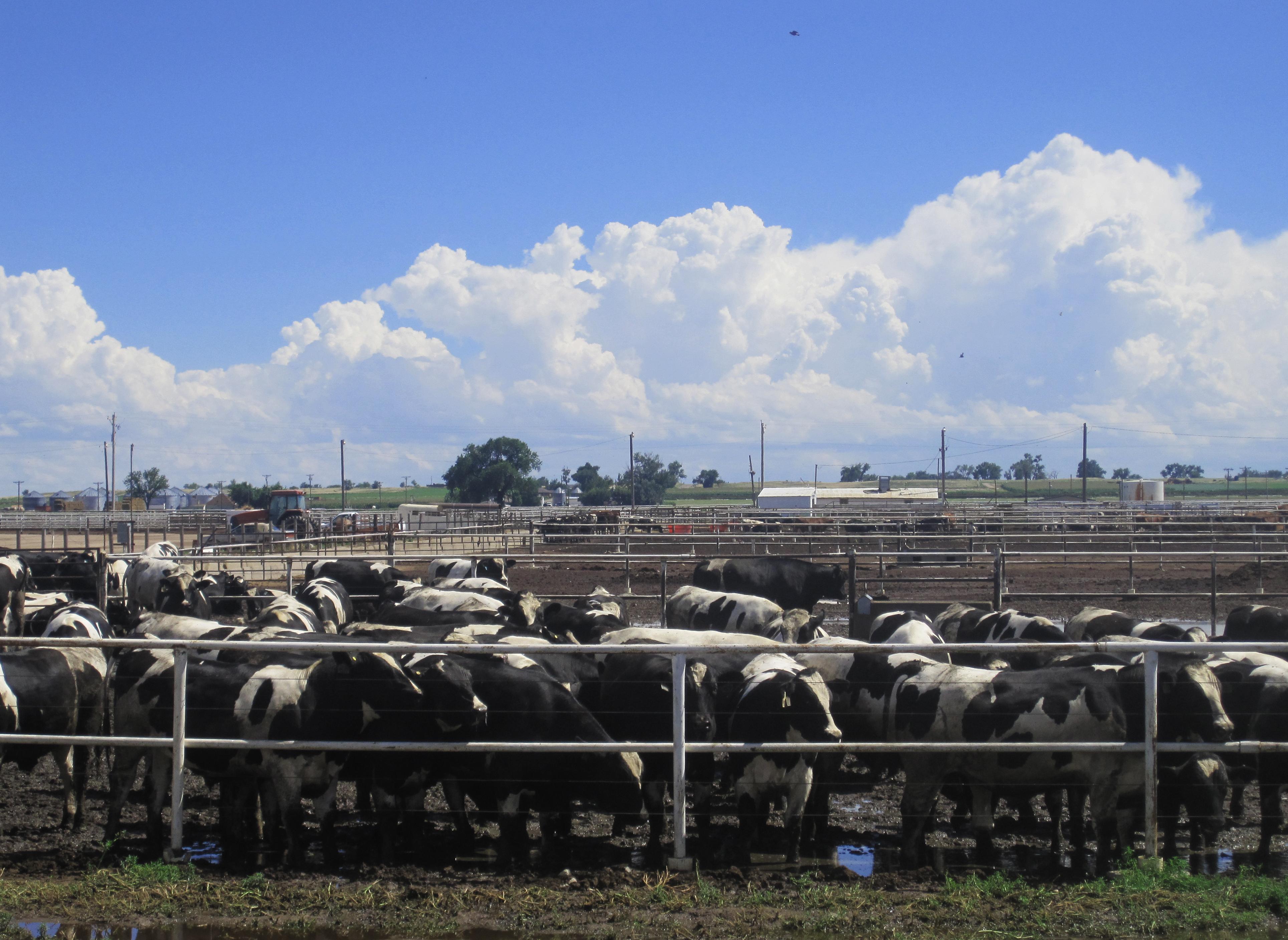Cattle Herd Management Spreadsheet In Animal Husbandry  Wikipedia
