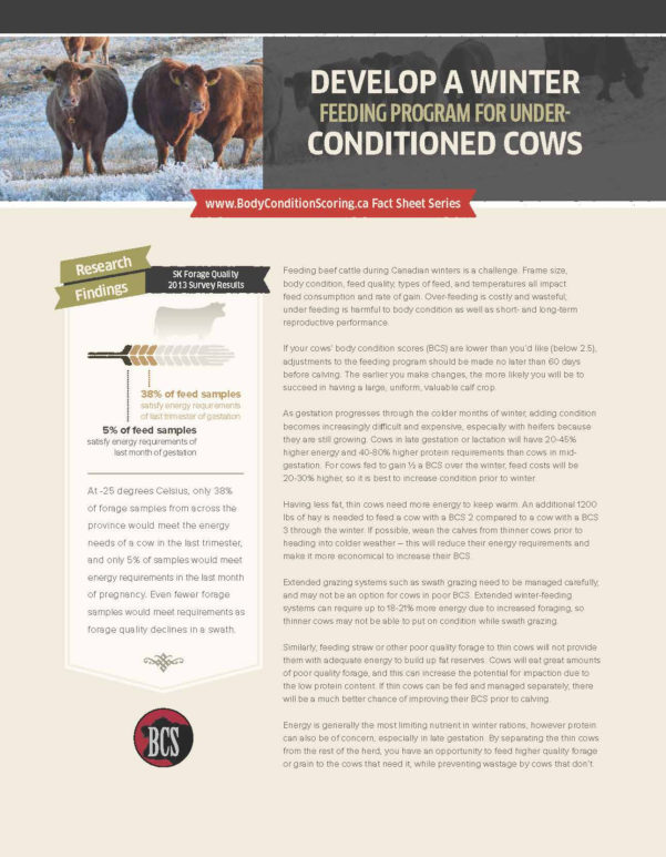 Cattle Herd Management Spreadsheet Throughout Body Condition Scoring  Beef Cattle Research Council