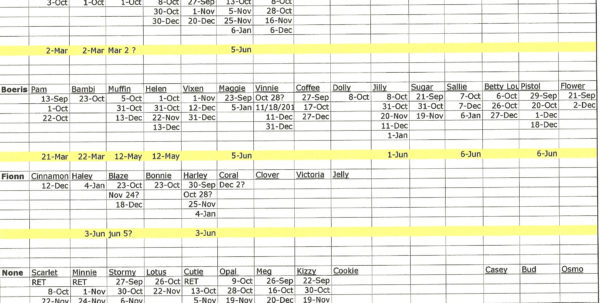 Cattle Spreadsheets For Records With Regard To 24 Images Of Cattle Management Template Excel  Bfegy