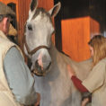 Horse Boarding Spreadsheet Throughout The Real Cost Of Horse Ownership – The Horse