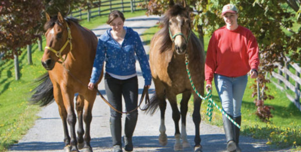 Horse Boarding Spreadsheet With Regard To Make Money Boarding Horses  Expert Advice On Horse Care And Horse