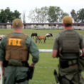 Horse Racing Experts Calculation Spreadsheet Throughout The Rookie And The Zetas: How The Feds Took Down A Drug Cartel's
