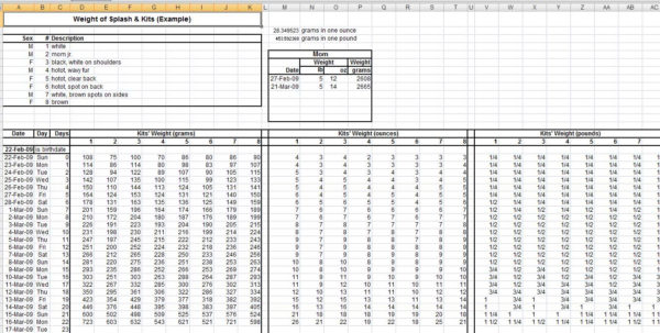 Medicine Spreadsheet Pertaining To Curious Bunny, Spreadsheets Medicine Spreadsheet Google Spreadsheet