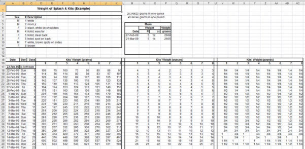 Medicine Spreadsheet Pertaining To Curious Bunny, Spreadsheets