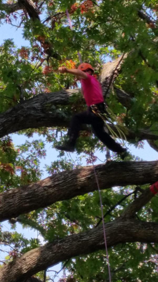 Tree Inventory Spreadsheet For Jodi Carlson  City Arborist  City Of Sacramento  Linkedin