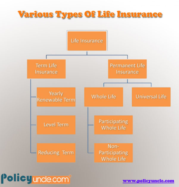 Whole Life Insurance Spreadsheet In Life Insurance Policies: Different Types Of Life Insurance Policies