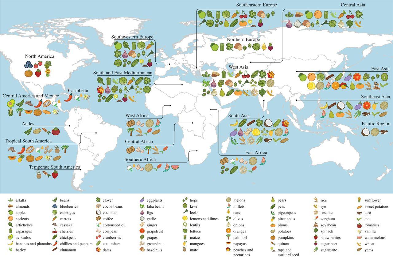 Zone Diet Spreadsheet Within Zone Diet Blocks Spreadsheet – Spreadsheet Collections