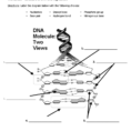 1 Name Chapter 12 – Dna Worksheet – Structure Of Dna And