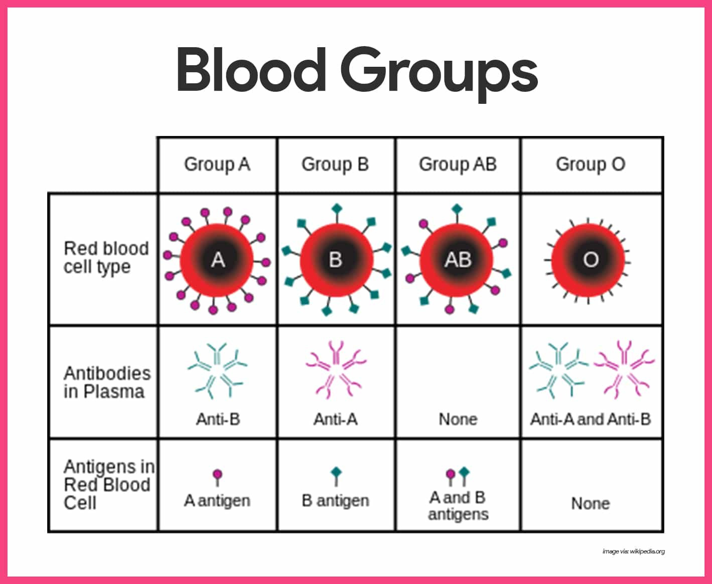 Blood Anatomy And Physiology Study Guide For Nurses — db ...