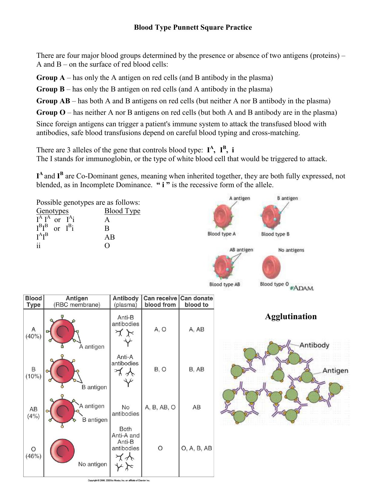 Blood Type Punnett Square Practice | db-excel.com