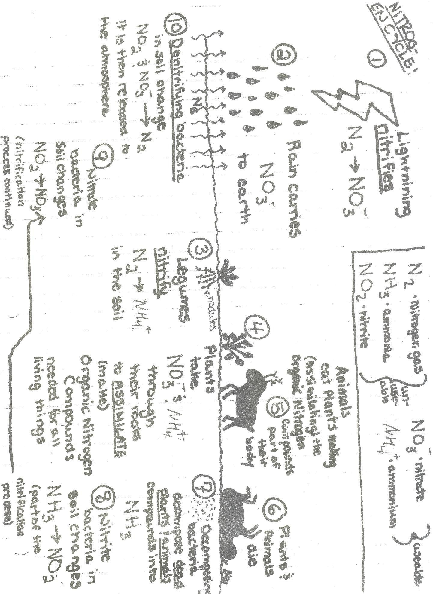 Nutrients The Carbon Cycle Worksheet By Harwooda Manual Guide