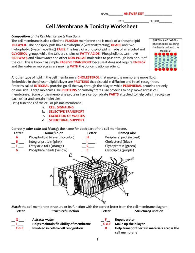 Cell Membrane  Tonicity Worksheet