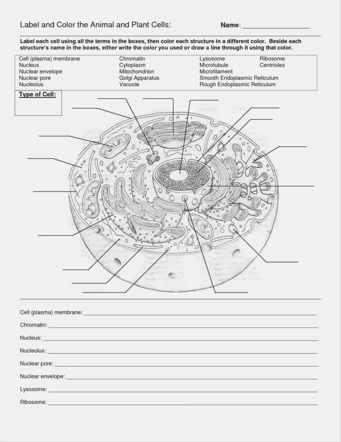 Cells Alive Plant Cell Worksheet Answer Key And Animal And