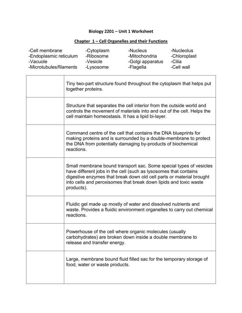 Ch 1  Cell Organelles Worksheet