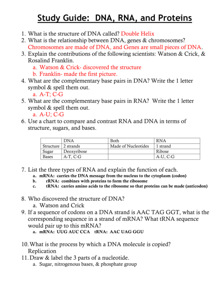 Dna Rna And Proteins Worksheet Answer Key — db-excel.com