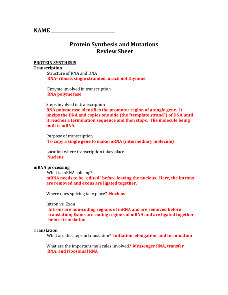 Dna Protein Synthesis Review Worksheet — db excel.com