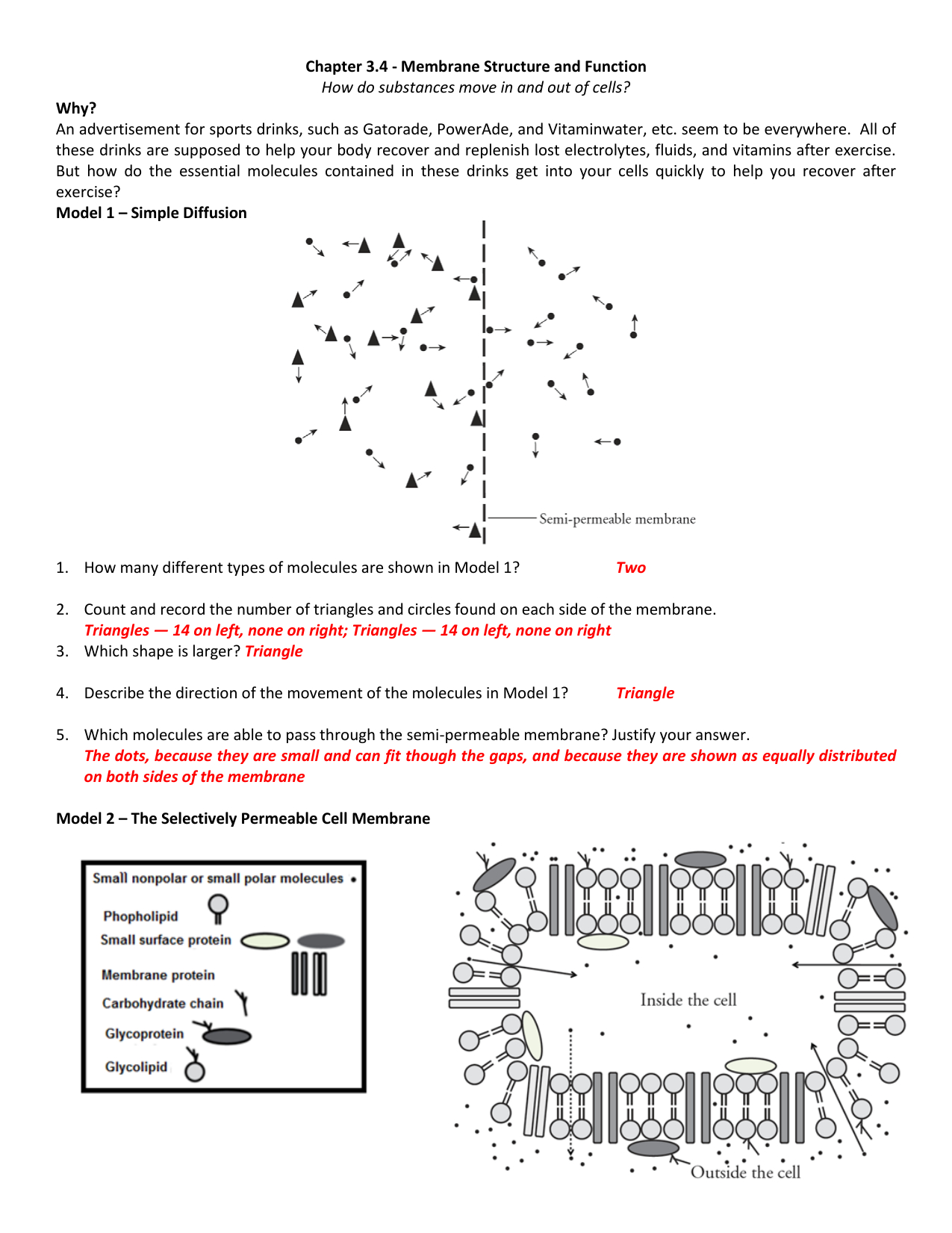 Membrane Structure And Function Worksheet   db-excel.com