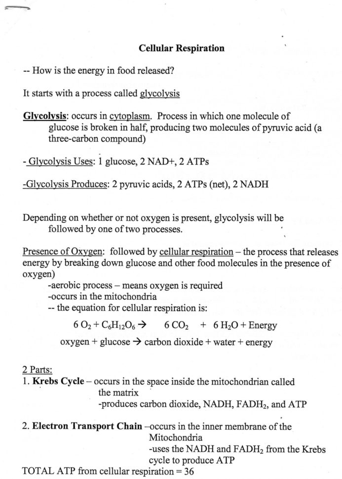 Chapter 7 Section 4 Cellular Transport Worksheet Answers ...