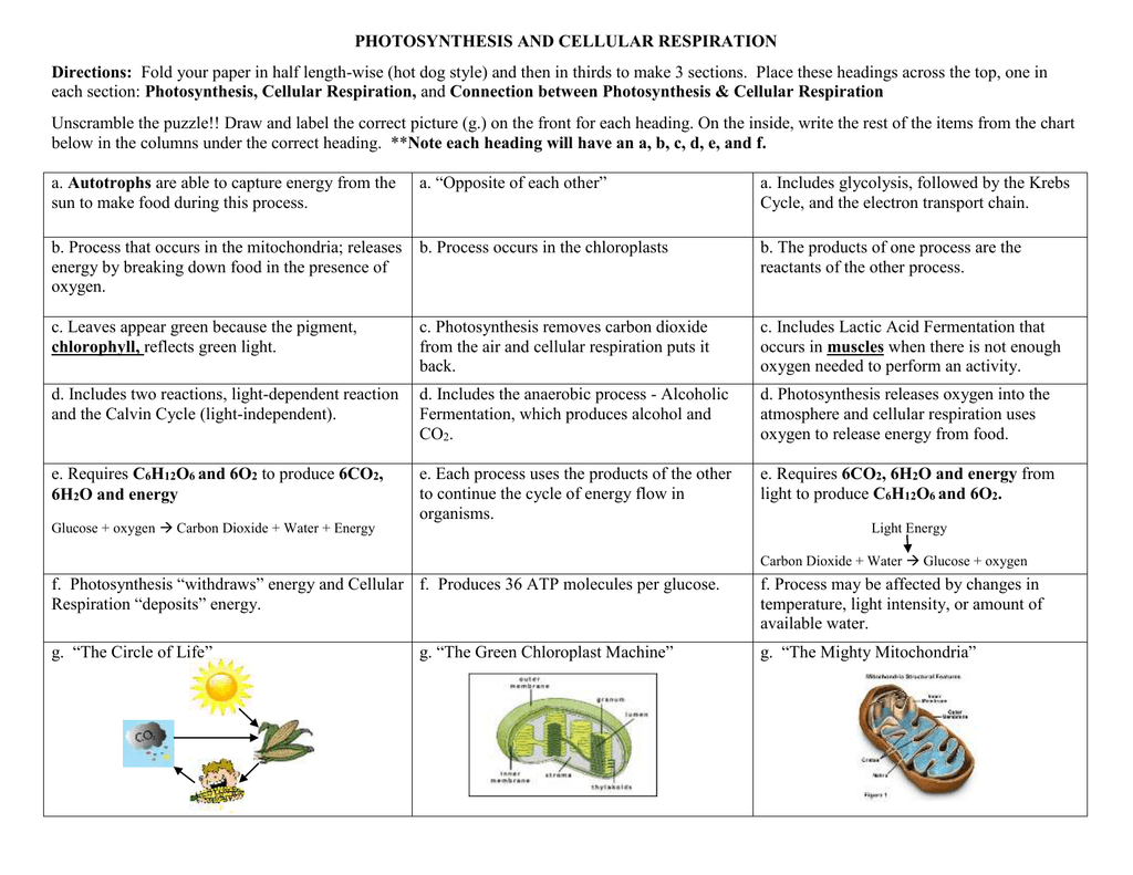 Concept Map   Photosynthesis And Cellular Respiration — db ...