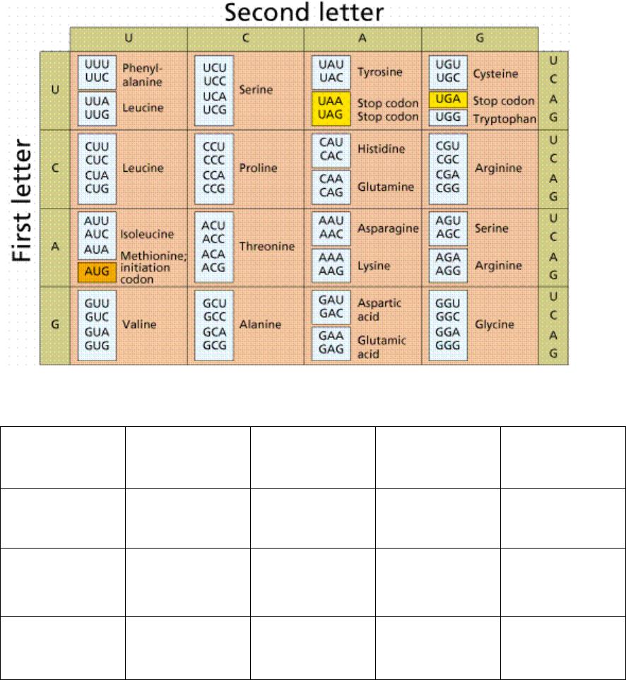 Dna Base Pairing Worksheet | db-excel.com