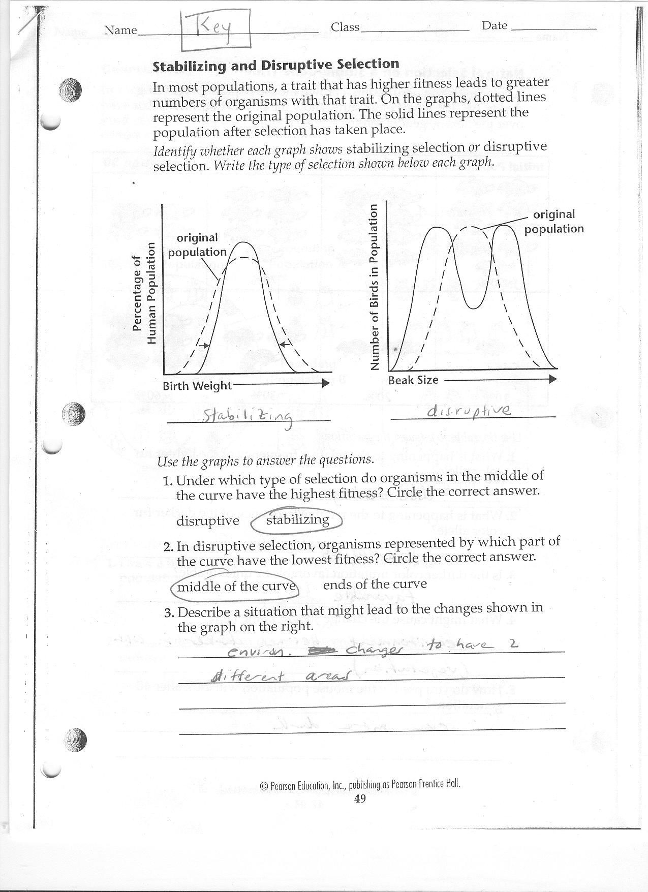 Dna Review Worksheet Answer Key Worksheet — db-excel.com