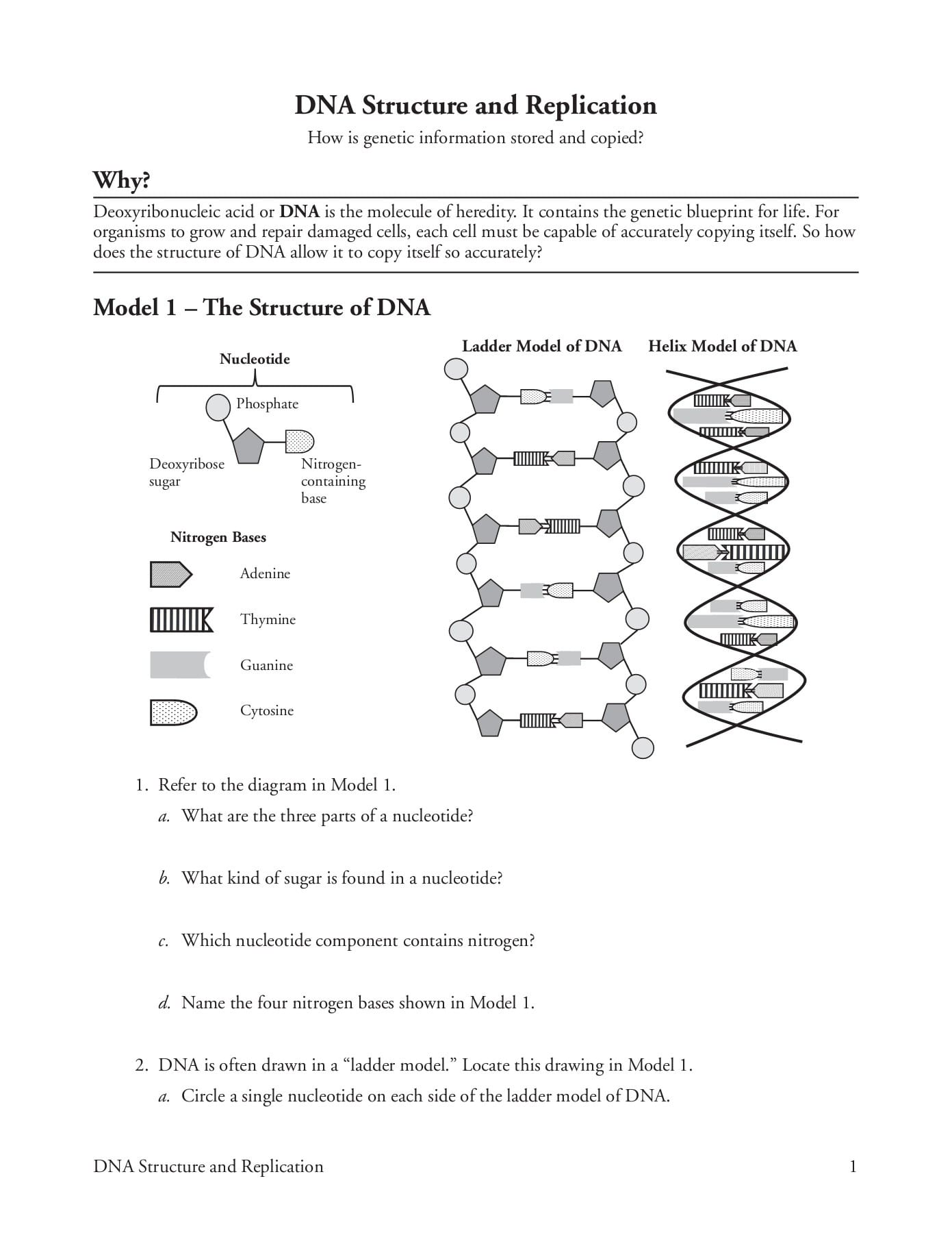 Dna Molecule And Replication Worksheet Answers | db-excel.com