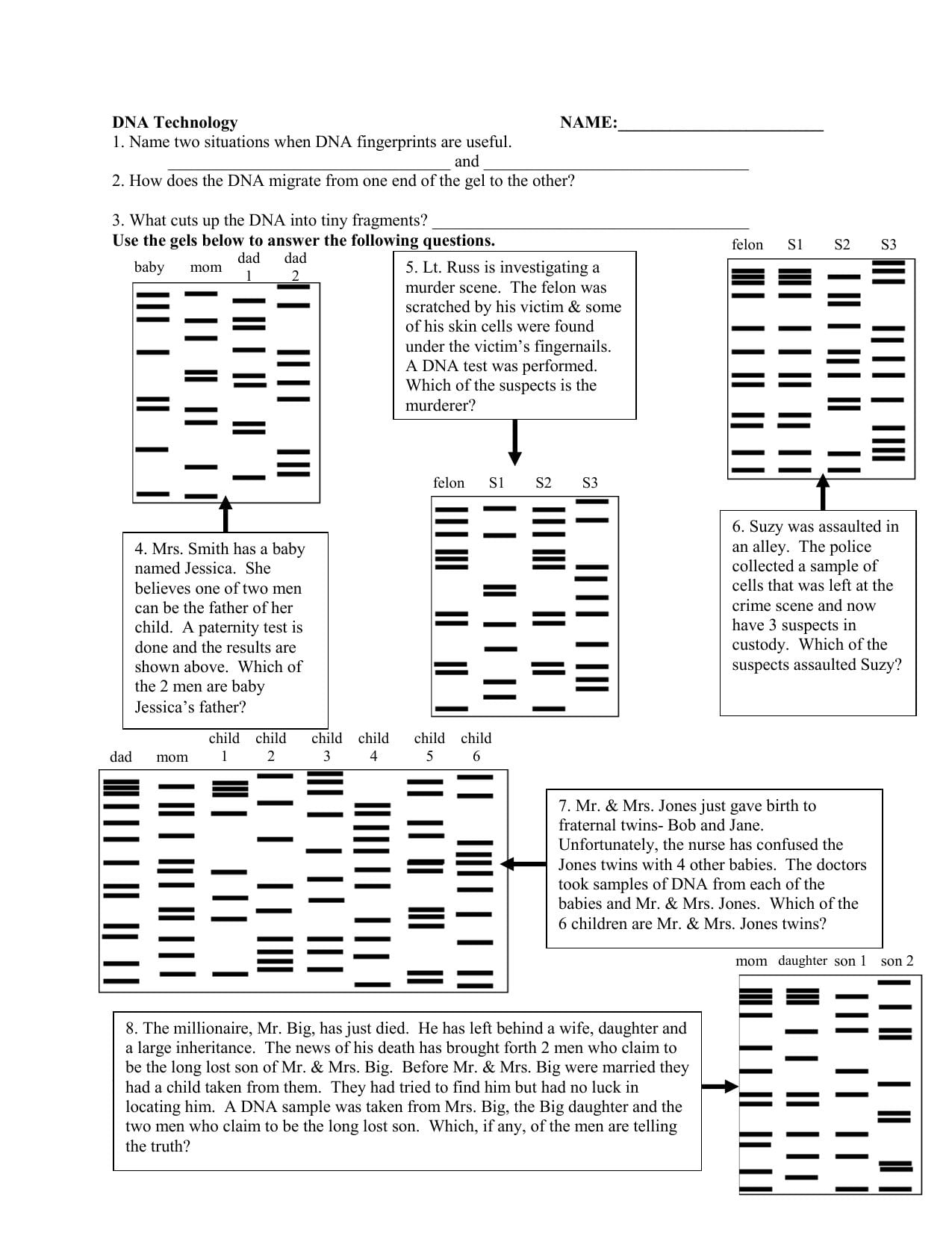 Dna Fingerprinting And Paternity Worksheet Answer Key — db ...