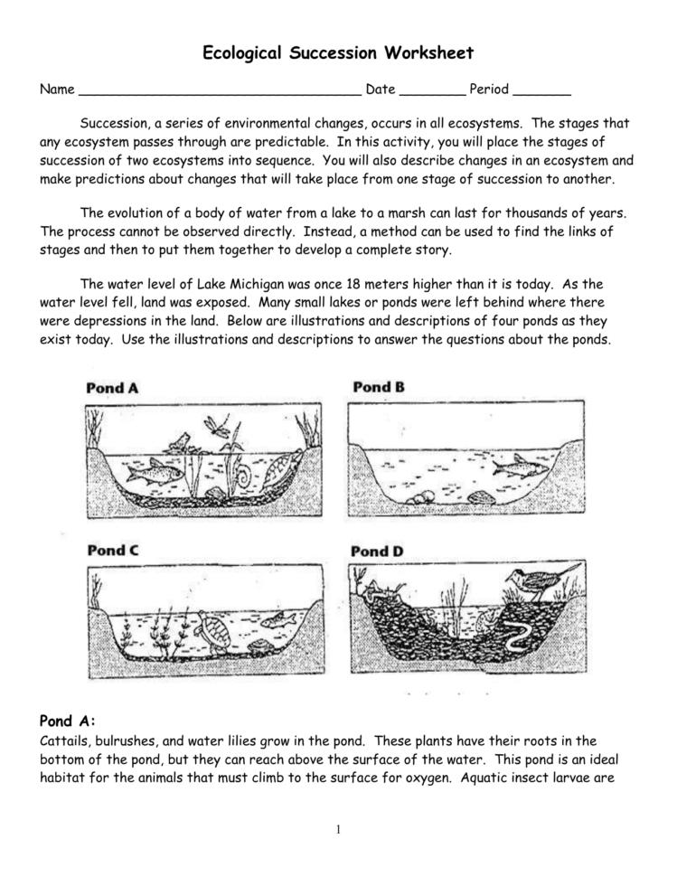 Ecological Succession Worksheet — db-excel.com