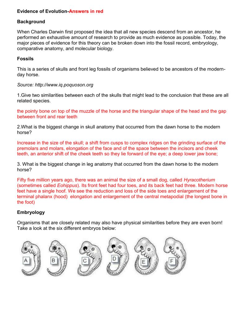 Evidence Of Evolution Worksheet Answers — db excel.com