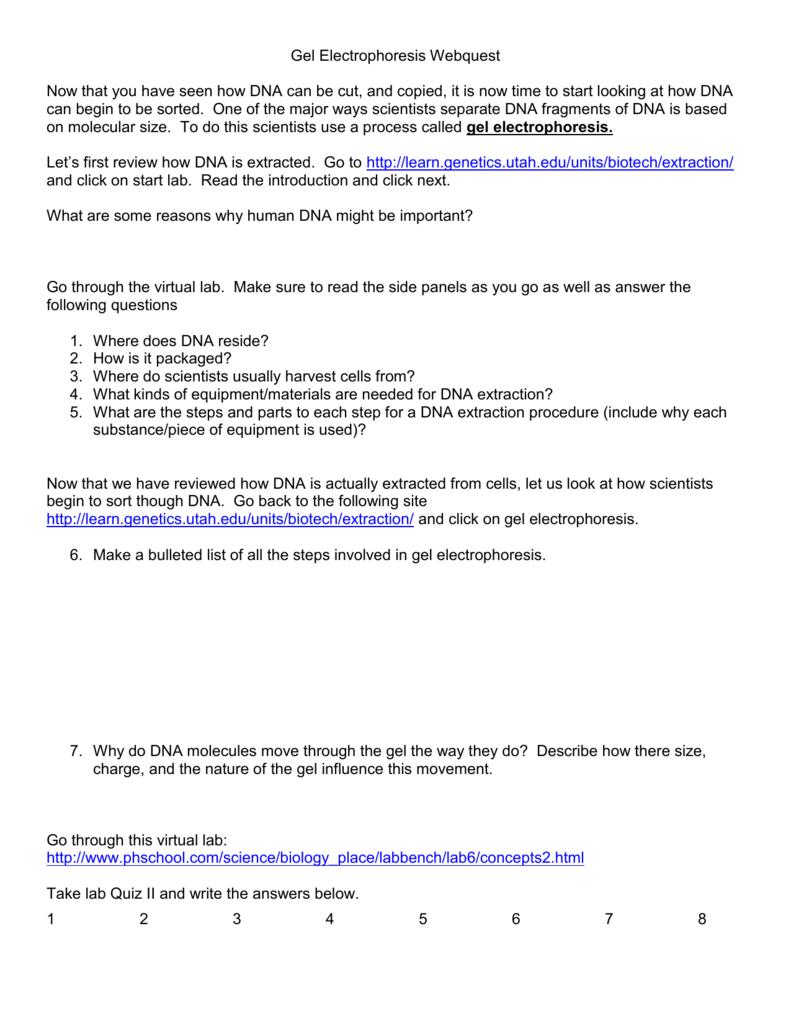 Virtual Gel Electrophoresis Lab Worksheet | db-excel.com