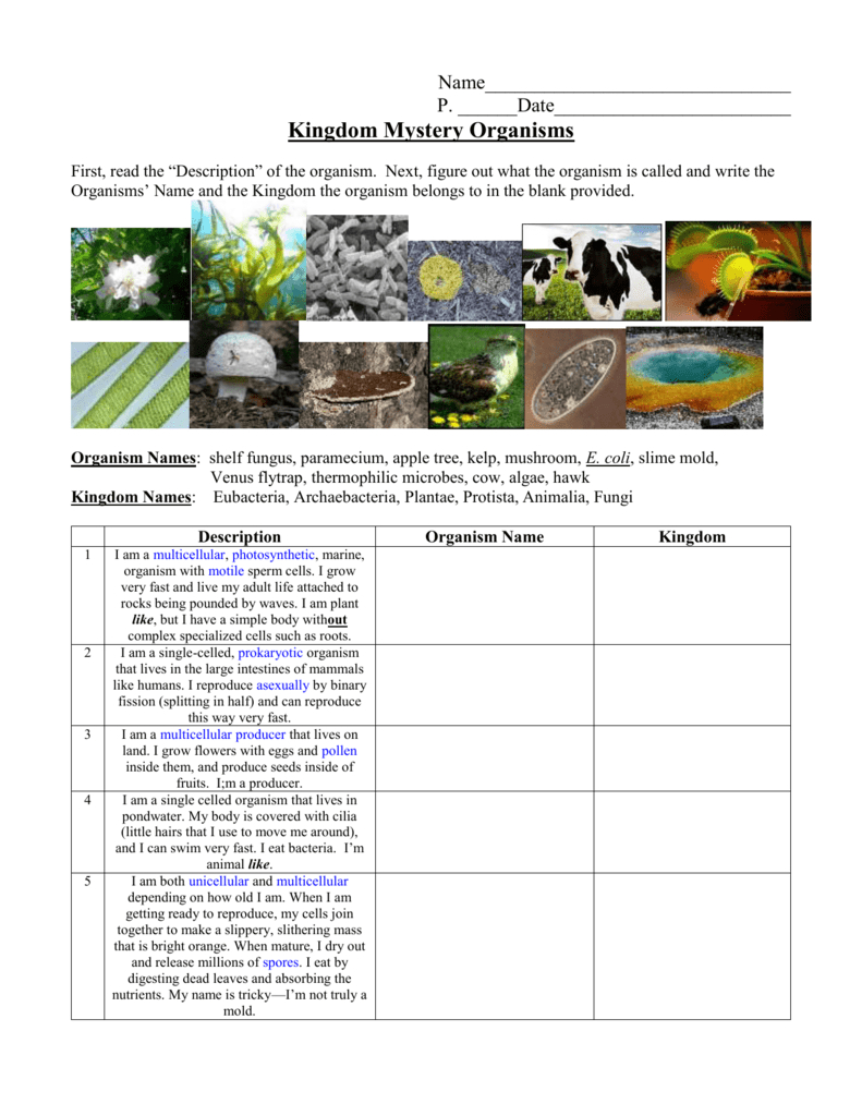 Kingdom Classification Worksheet