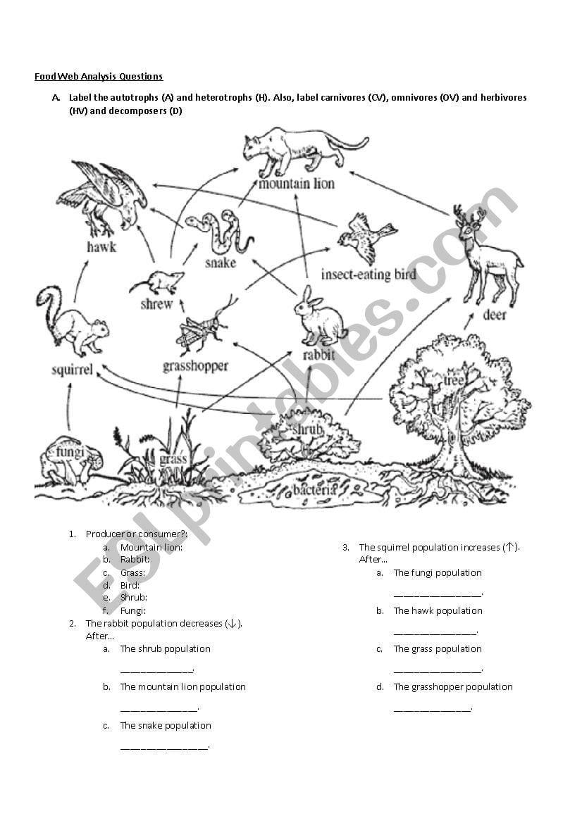Newcomer Food Web Analysis Questions Esl Worksheet — db ...