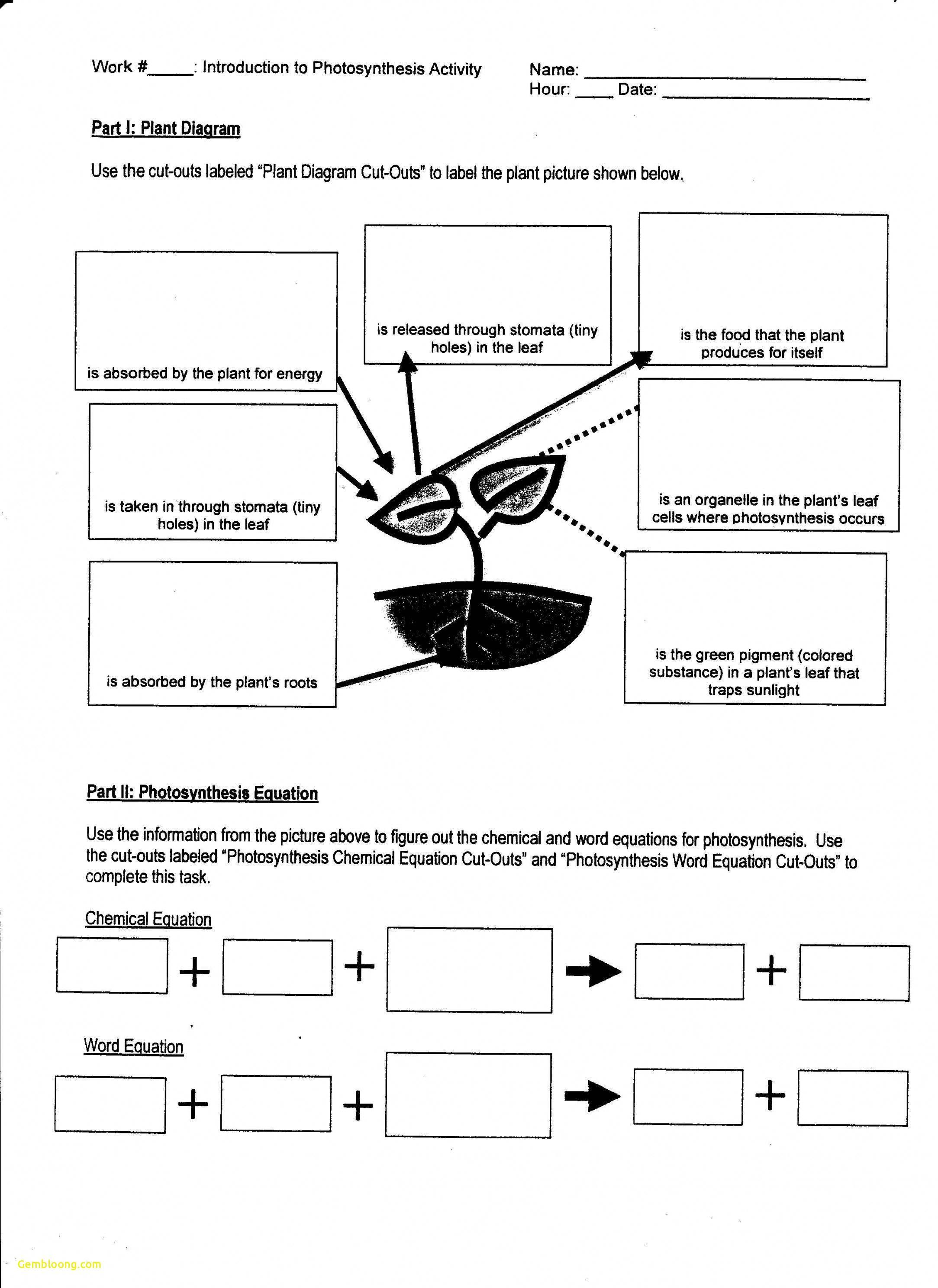 Photosynthesis Worksheet High School — db excel.com