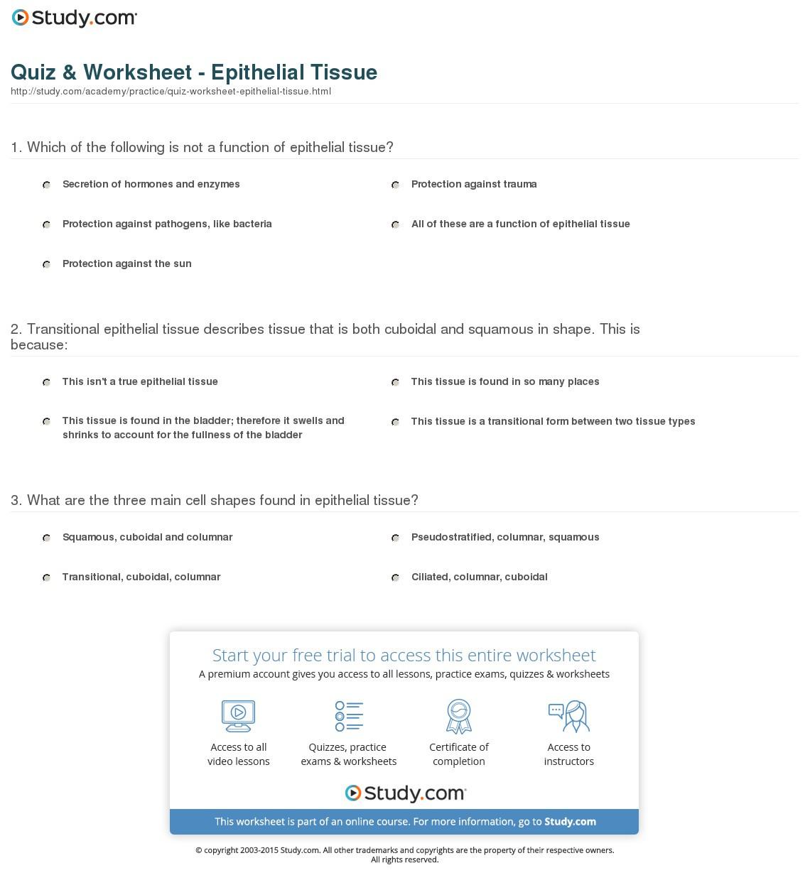 Quiz Worksheet Epithelial Tissue Study — db excel.com