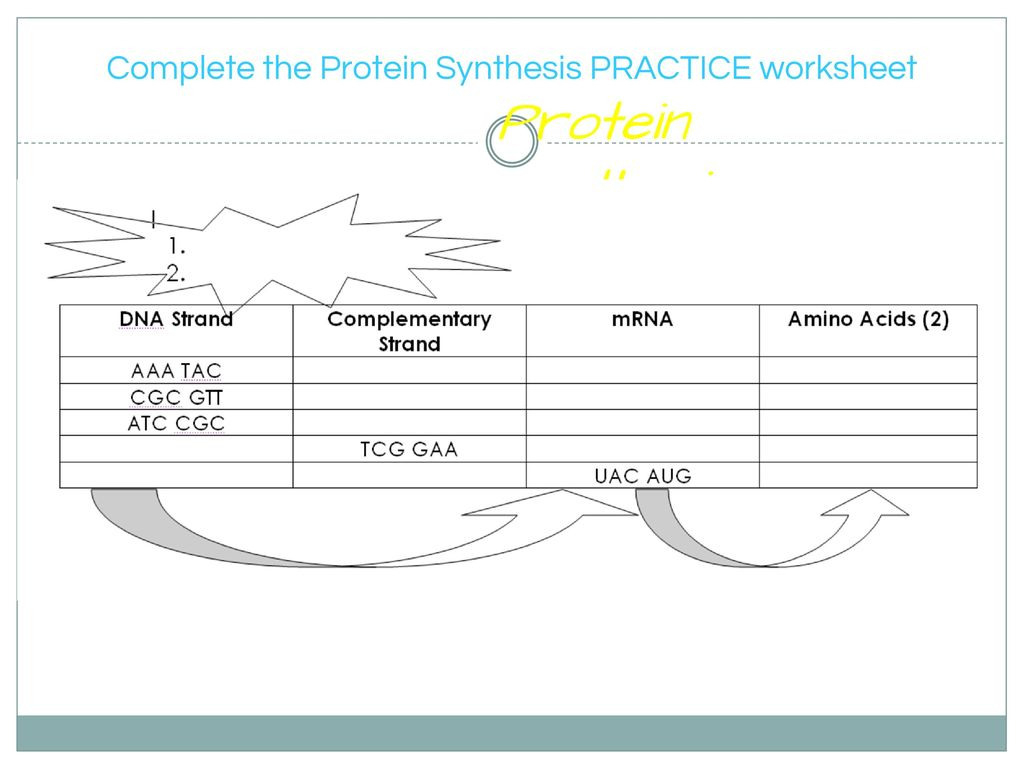 Protein Synthesis Practice Worksheet — db-excel.com