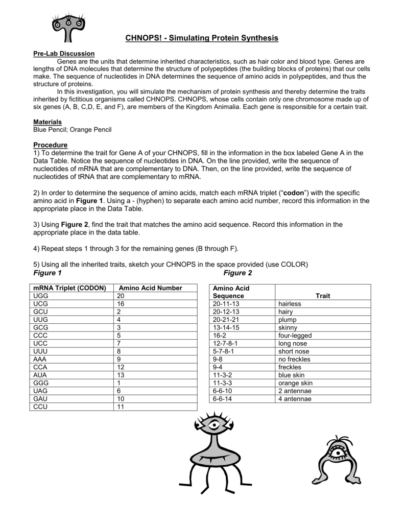 Protein Synthesis And Amino Acid Worksheet Answers   db ...