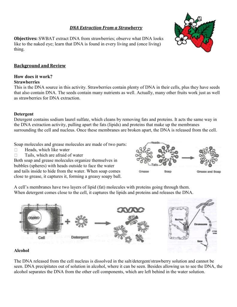 Strawberry Dna Lab — db-excel.com