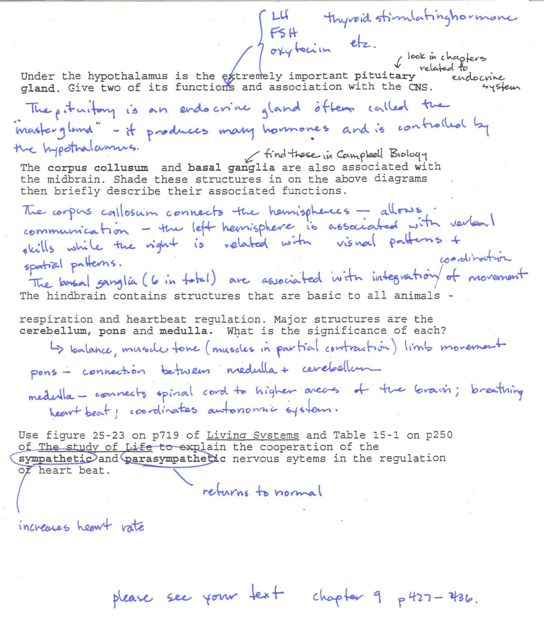 Transcription And Translation Worksheet Answer Key Biology ...