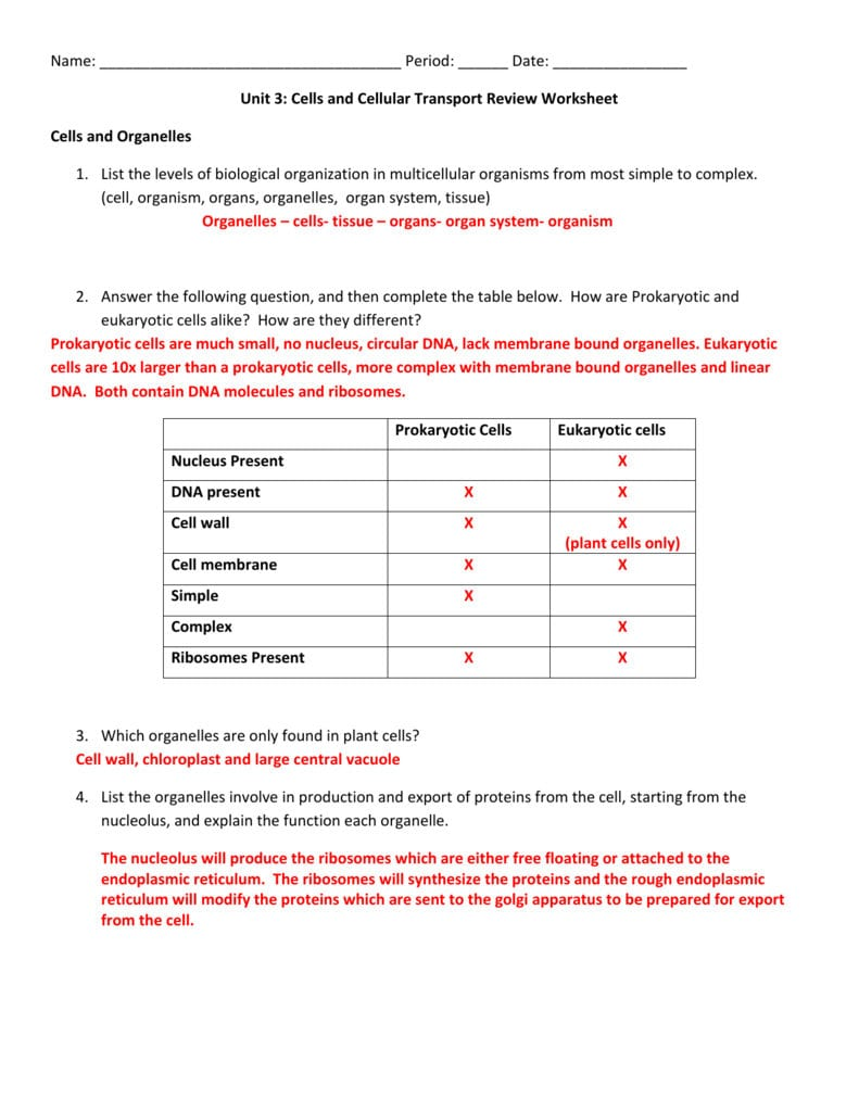 7 3 Cell Transport Worksheet Answers — db excel.com