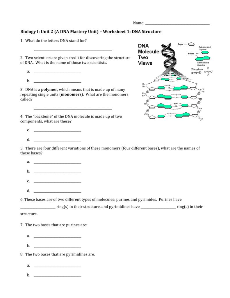 Worksheet 1 Dna Structure — db-excel.com