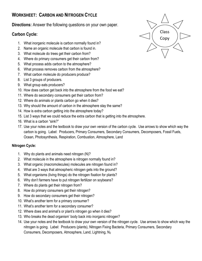 Worksheet Carbon And Nitrogen Cycle