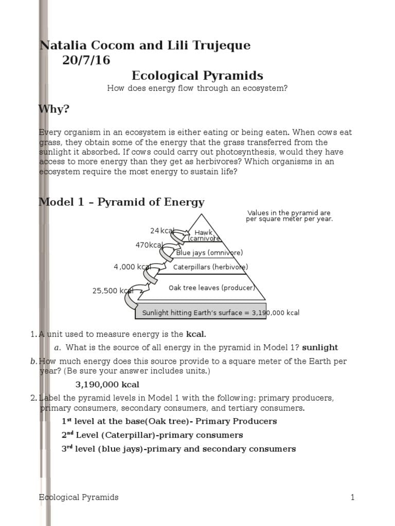 Ecological Relationships Pogil Worksheet Answers   db ...
